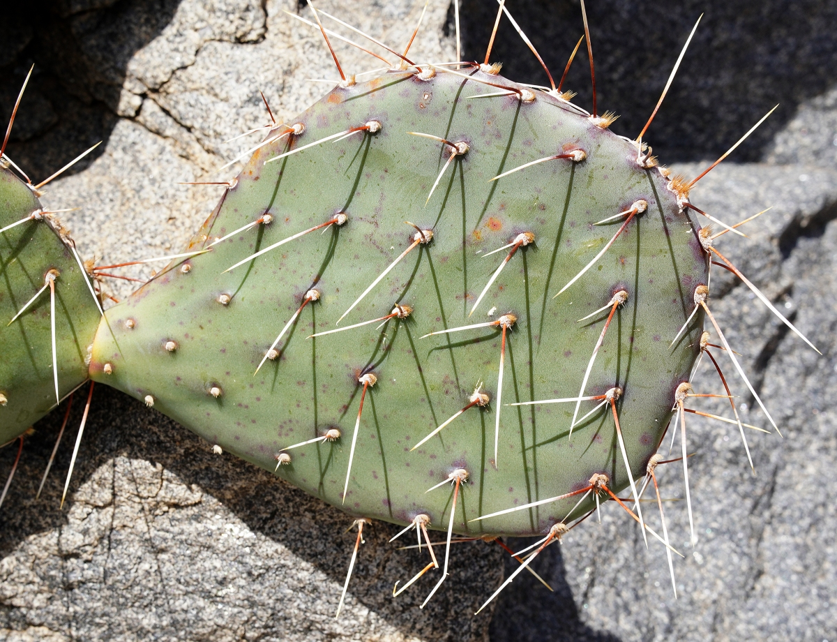 cactus2web