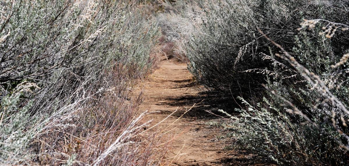sageweb