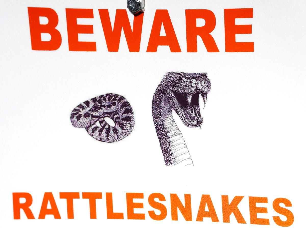Snake signweb