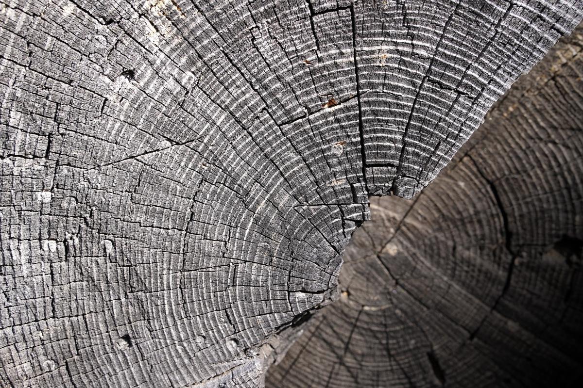 treeringweb